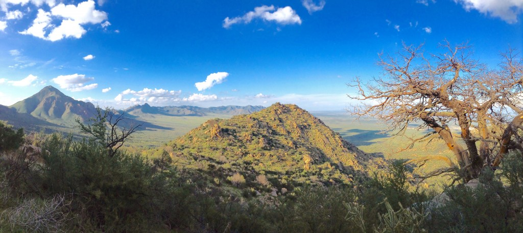 Panoramic view from Pine Tree Trail, Aguirre Spring, NM.