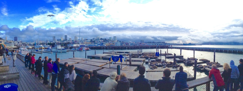Watching Sea Lions at San Francisco's Pier 39, one of 5 (+1) Northern California places to go.