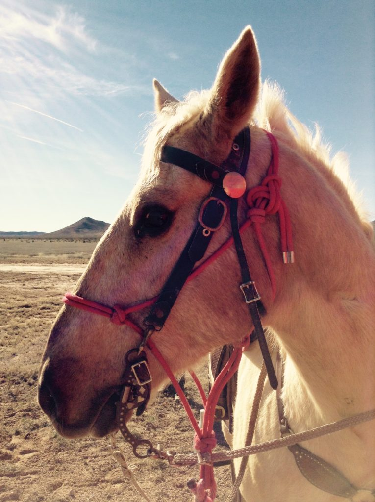 Trail horse at the end of a Corralitos adventure.
