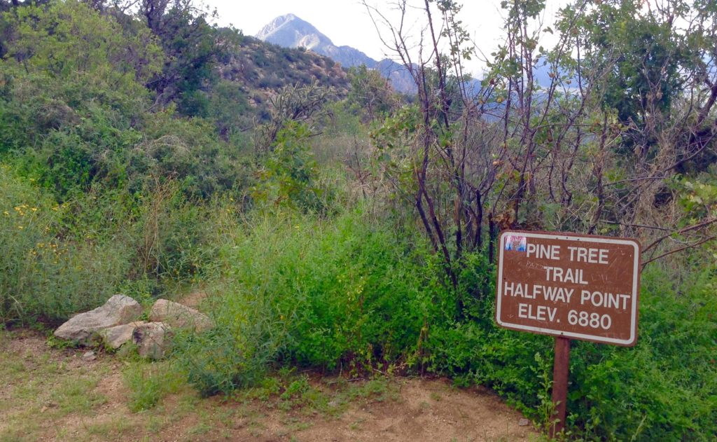 Halfway point sign on the Pine Tree Trail, an Aguirre Spring scenic hike.