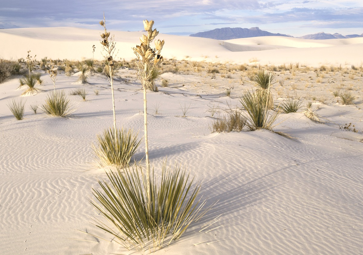 Spending time at White Sands National Monument is a good way to keep your Southern New Mexico cool provided you visit in the early morning or evening hours.