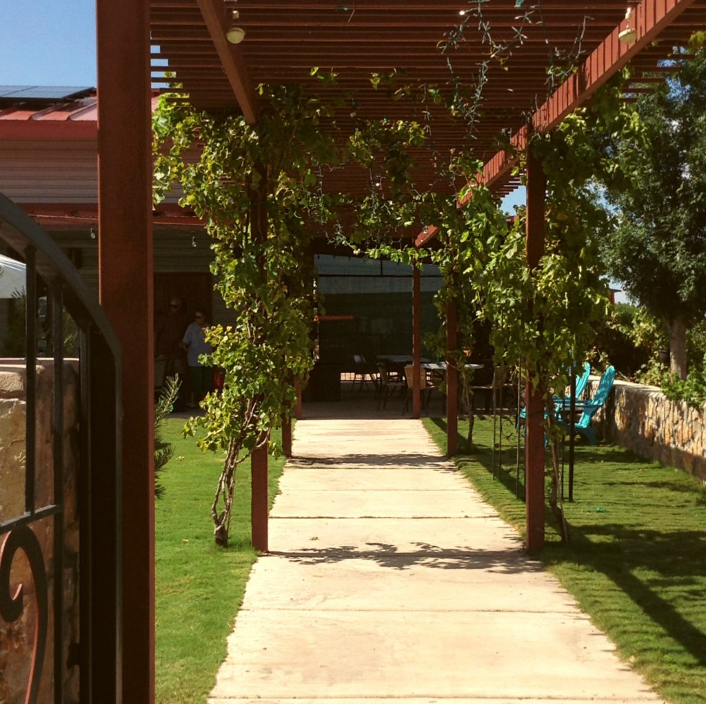 When the patio party is also wedding, this vine-covered walkway at Sombra Antigua Winery affords the bridal procession a grand entrance.